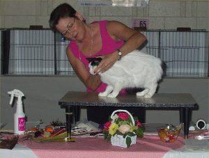 katten-och-kattutstallningar-1