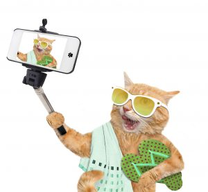 Cat taking a selfie with a smartphone. Isolate on the white.